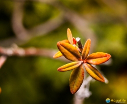 15-octobre-coeur-feuilles