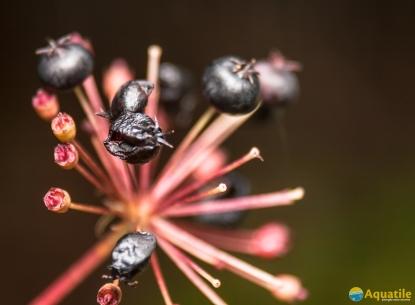 16-septembre-petits-fruits