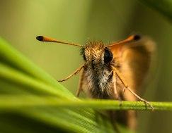 18-juillet-papillon-mignon-corrige
