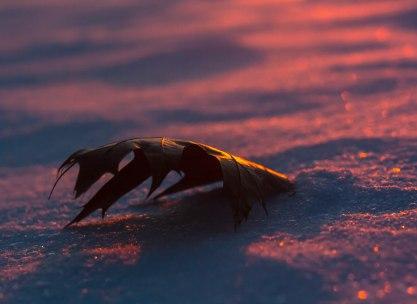 2-fevrier-coucher-soleil-feuille-morte-1-sur-1