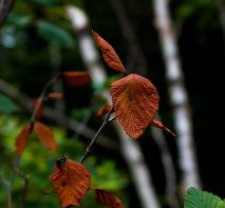 2-septembre-feuilles-automne