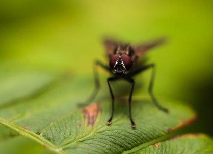 2-septembre-mouche