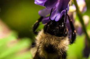 9-juillet-abeille