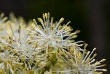 9-juillet-fleurs