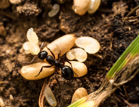 9-juillet-fourmi