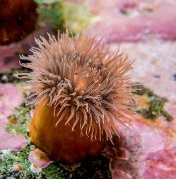 bebe-anemone