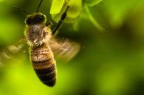 camping-abeille-qui-butine