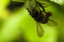 camping-abeille-qui-butine2
