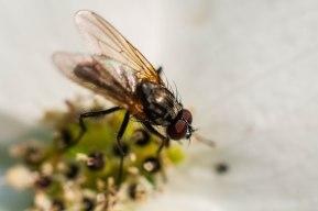 camping-mouche-se-prend-pour-abeille