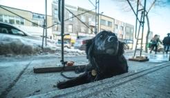 chien noir (1 sur 1)
