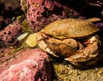crabes-couple