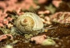escargot (1 sur 1)