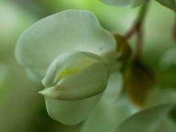 fleur-blanche-verda%cc%82tre