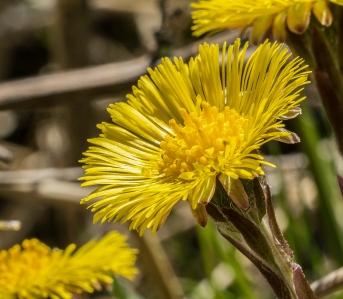 fleur jaune2 (1 sur 1)