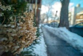 fleurs-rue