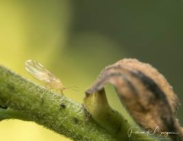larve (1 sur 1)