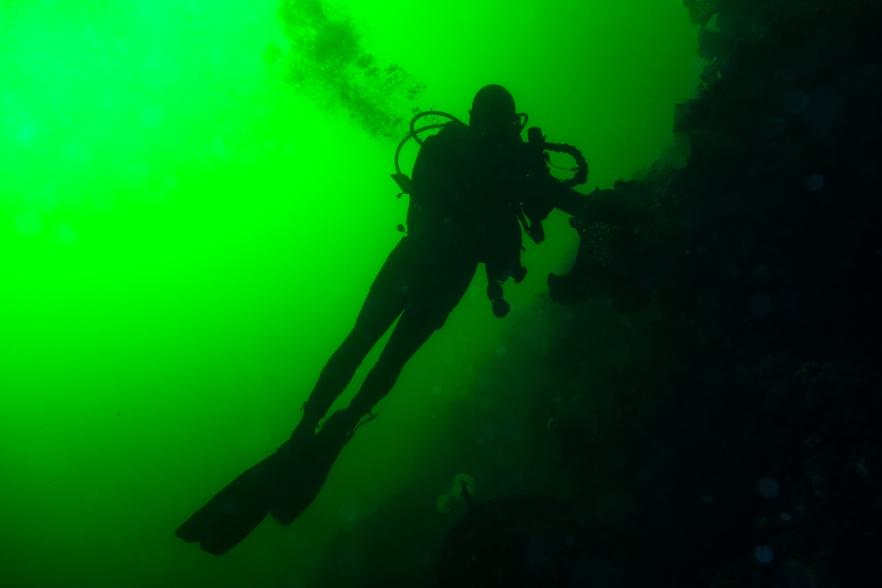 plongeur grand vert2