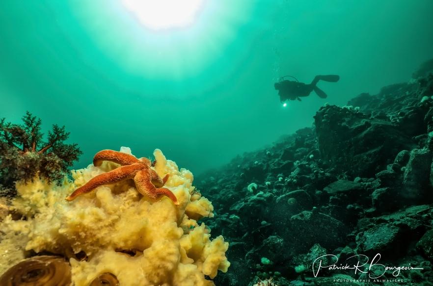 récif plongeur (1 sur 1)