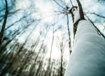 tronc-neige2