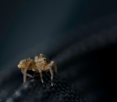 araignée sac (1 sur 1)