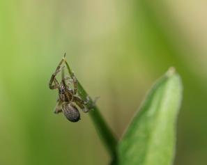 araignée tige (1 sur 1)
