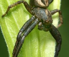 araignée?2 (1 sur 1)