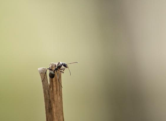 fourmi grimpe (1 sur 1)