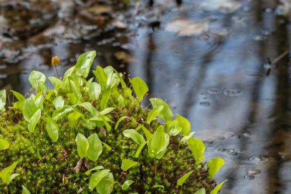 herbes marais3 (1 sur 1)