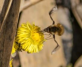 mouche vole (1 sur 1)