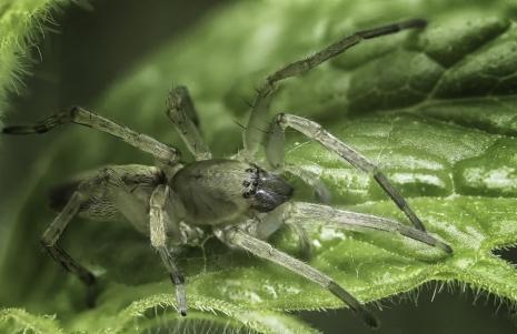 araignée fusion (1 sur 1)
