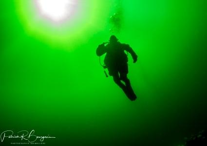 plongeur (1 sur 1)