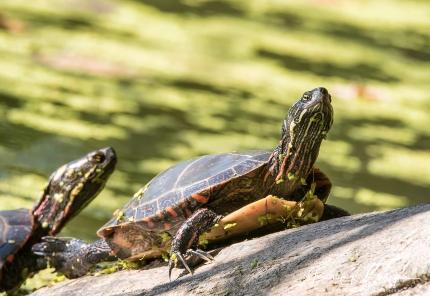 tortues (1 sur 1)